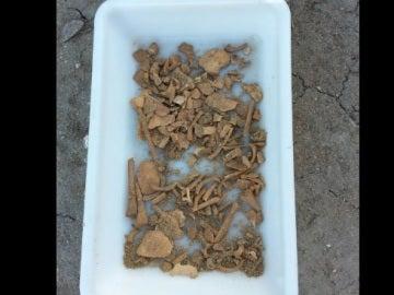 Los restos del esqueleto encontrado