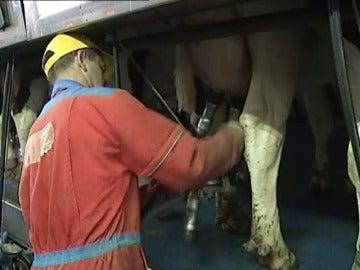 """Frame 14.28546 de: El sector lácteo atraviesa un momento de """"vacas flacas"""""""