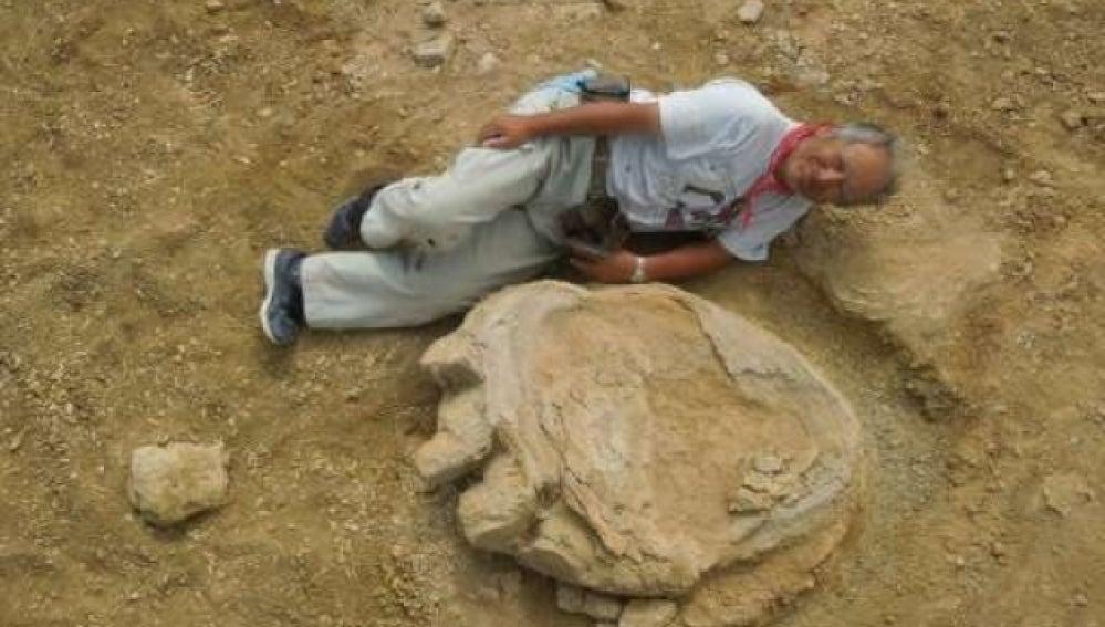 Huella de dinosaurio hallado en el desierto de Gobi