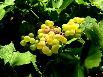 Frame 4.071709 de: En Rueda ya puedes 'comerte' el vino