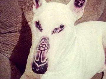 El perro tiene cinco tatuajes en distintas zonas de su cara