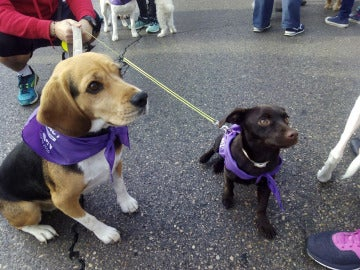 Dos de los perros que han participado en el Perrotón