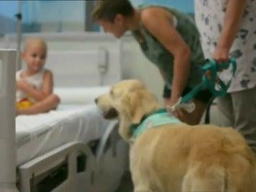Frame 30.19735 de: Los trabajadores del Hospital La Fe de Valencia comparten sus perros con los pacientes