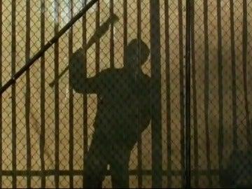 Frame 1.63341 de: Ezekiel y su tigresa Shiva llegan a 'The Walking Dead'