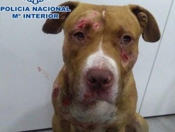 Uno de los perros rescatados