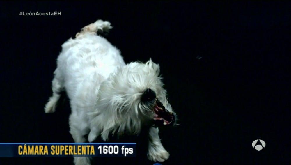 Frame 94.304693 de: perro soplahojas