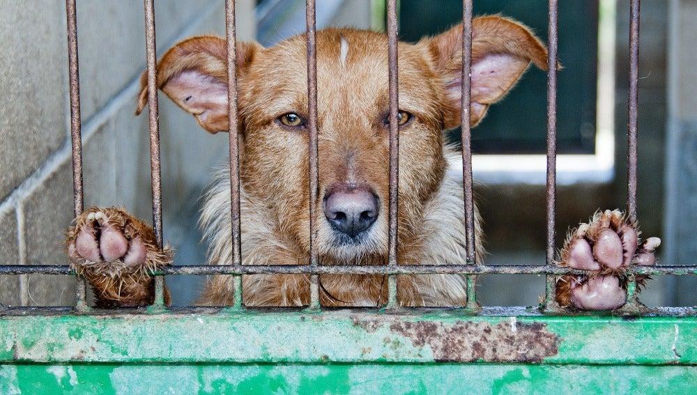 Rescatan dos perros desnutridos y abandonados