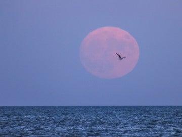 La superluna en el lago Michigan