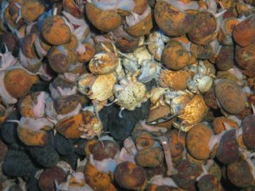 Nueva especie animal descubierta en el Océano Índico