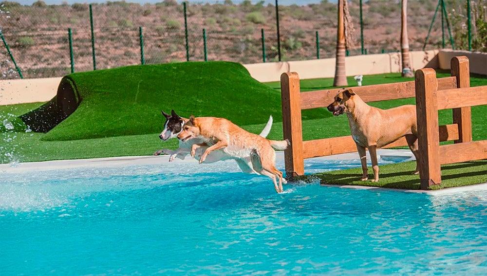 Tres perros bañándose en la piscina del hotel