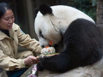 El oso panda Pan Pan celebrando un cumpleaños