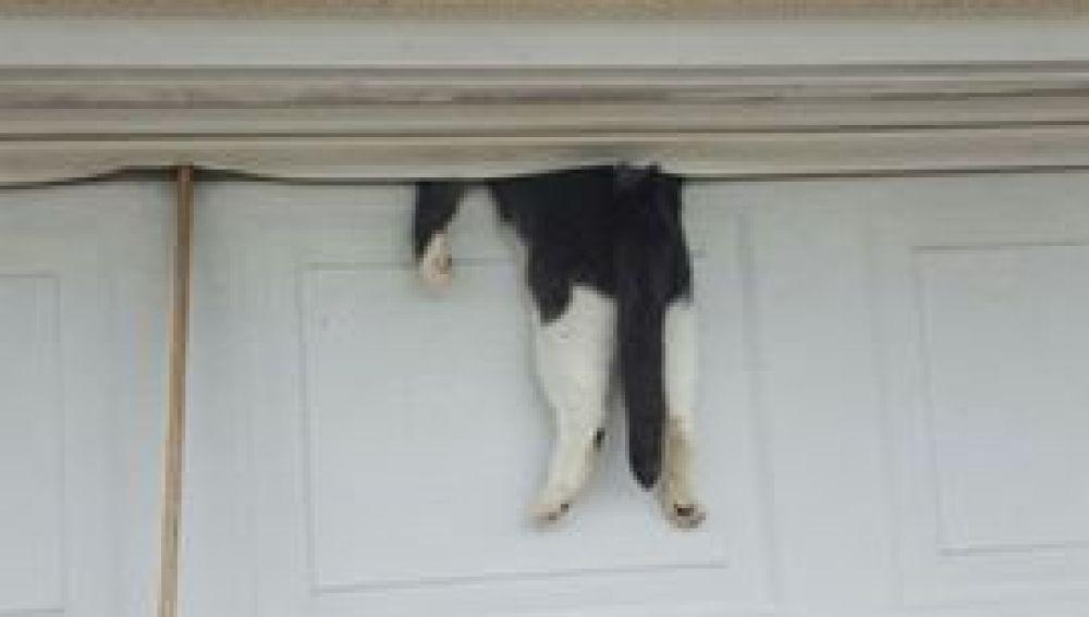Un gato atrapado en la puerta del garaje