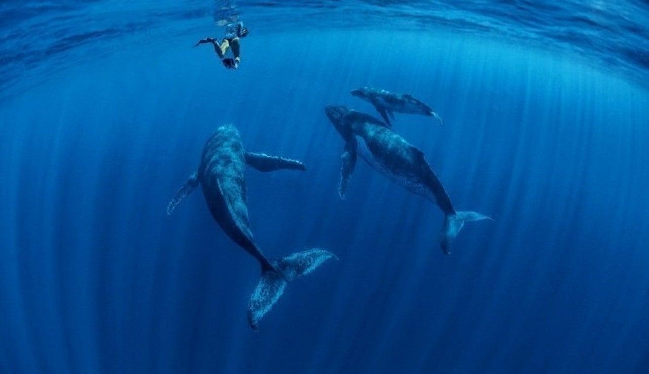 Una fotógrafa capta el vínculo entre ballenas y sus crías