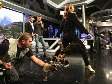 Un águila harris 'atraviesa' a Drew Barrymore y Timothy Olyphant