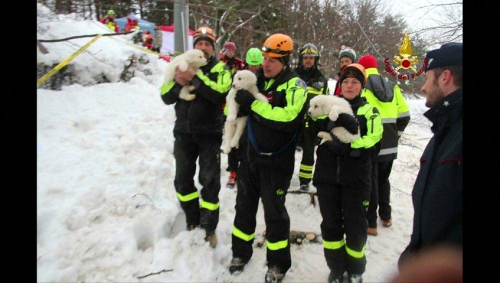 Frame 53.09878 de: Rescatan con vida a tres cachorros de perro que estaban atrapados en el hotel sepultado por el alud en Italia