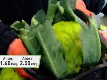Frame 55.3251 de: La ola de frío ha duplicado el precio de verduras y hortalizas españolas en el mercado europeo