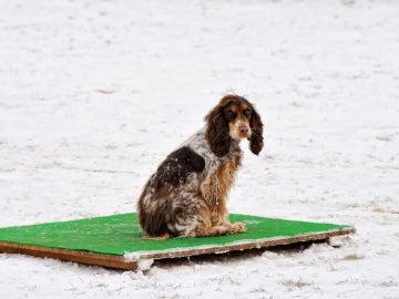 Un perro abandonado en la nieve