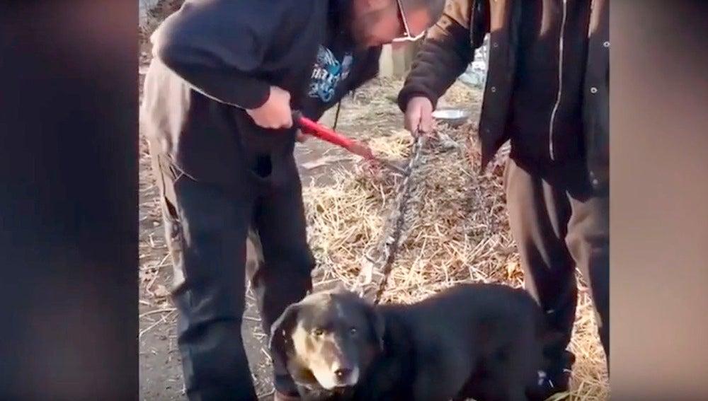 Momento en el que rescatan a Bear
