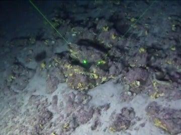 Frame 17.480283 de: Difunden las primeras imágenes del arrecife de coral descubierto en Brasil el año pasado