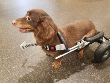 Frances con su silla de ruedas