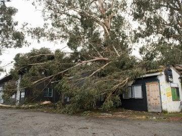 Un árbol cae sobre una capilla en Galicia a causa del temporal
