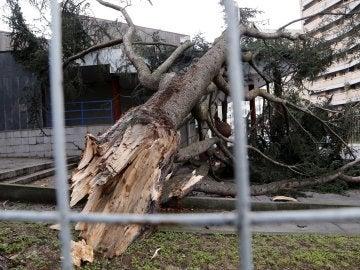 Ramas caídas por el temporal en Galicia