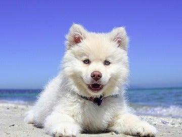 Cachorro en una playa