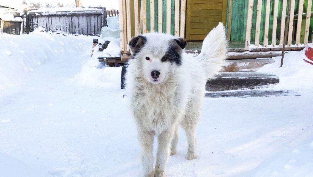 Un perro cuida de un niño abandonado