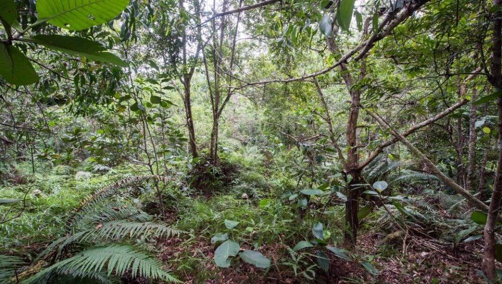 Soldados británicos en la jungla de Brunei