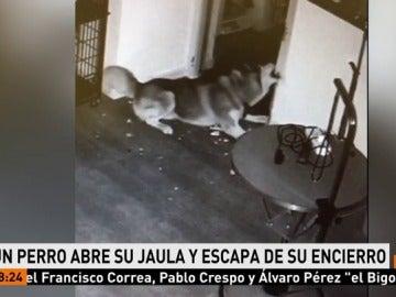 Un perro escapa de su encierro
