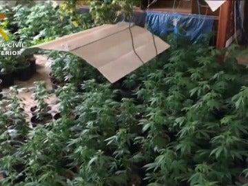 Frame 6.533333 de: Localizado más de un millar de plantas de marihuana en una casa de Bustarviejo
