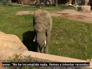 Frame 23.573333 de: elefante
