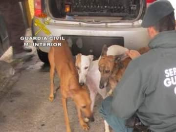 Condenan a seis meses de cárcel a un hombre por cortar los rabos y las orejas de diez perros sin sedarlos