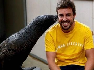 Fernando Alonso se ríe junto a una foca en el zoo de Melbourne