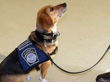 Murray, el perro rescatado