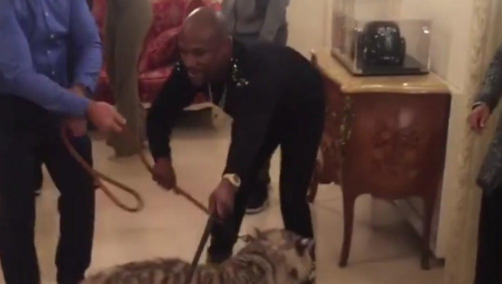 Mayweather, con sus dos tigres