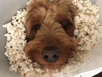 Murphy, con el collar isabelino lleno de palomitas