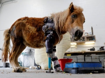 Un poni con dos prótesis