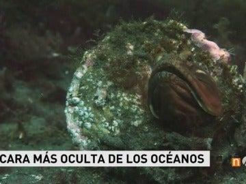 Frame 21.788766 de: oceanos