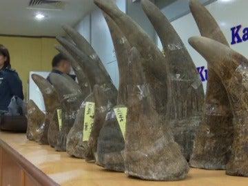 Frame 25.68439 de: Malasia incauta 18 cuernos de rinoceronte valorados en 3 millones de euros