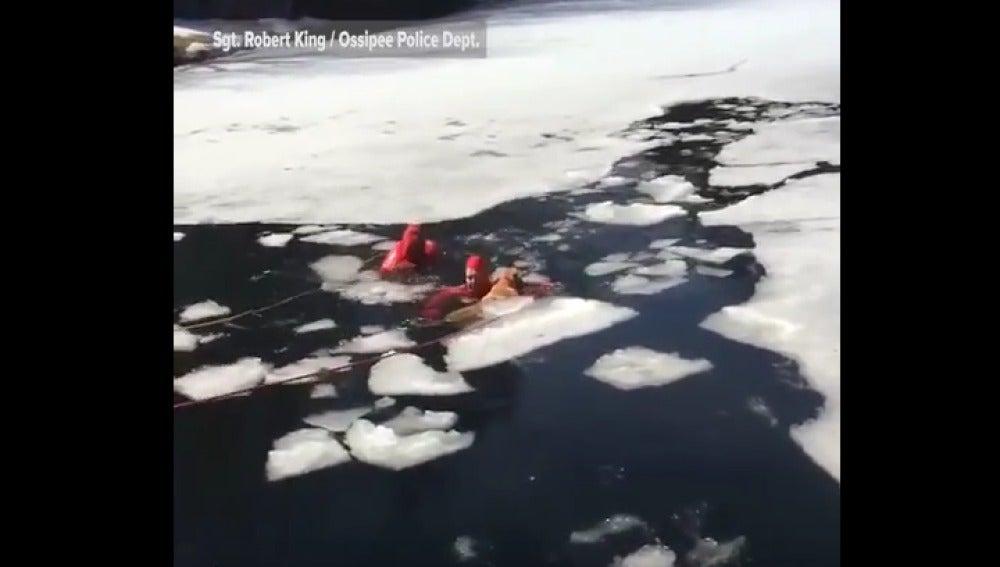 Bomberos salvan a perro de lago helado