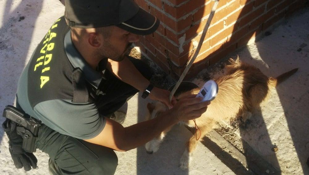 La Guardia Civil junto a un perro