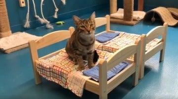 Ikea dona camas de muñecas en un refugio de Canadá para que los gatos duerman mejor