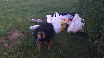 Tessa fue abandonada con una manta, una bolsa de comida y una nota de disculpas
