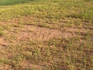 Frame 10.865742 de: Se pueden perder cosechas en siete comunidades