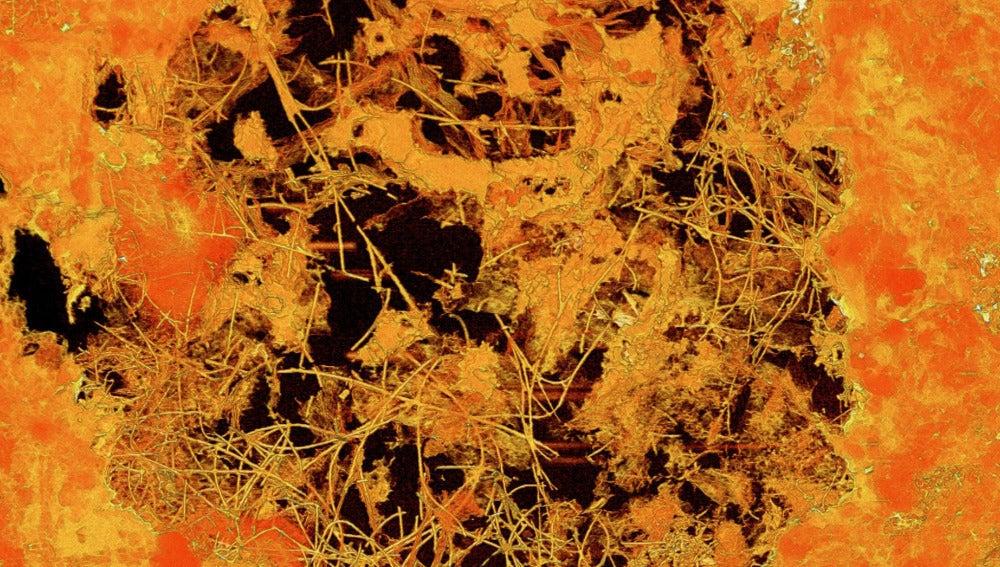 Hongos fósiles de 2.400 millones de años de antigüedad