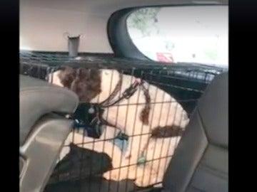 Rescate de un perro encerrado en una jaula en el interior de un coche