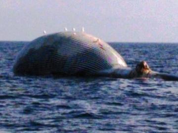 Avistan una ballena muerta en la costa de Girona