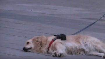 El perro escuchando música en Barcelona