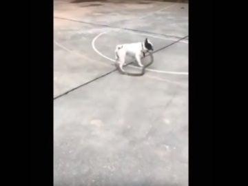 El perro escapando con la serpiente
